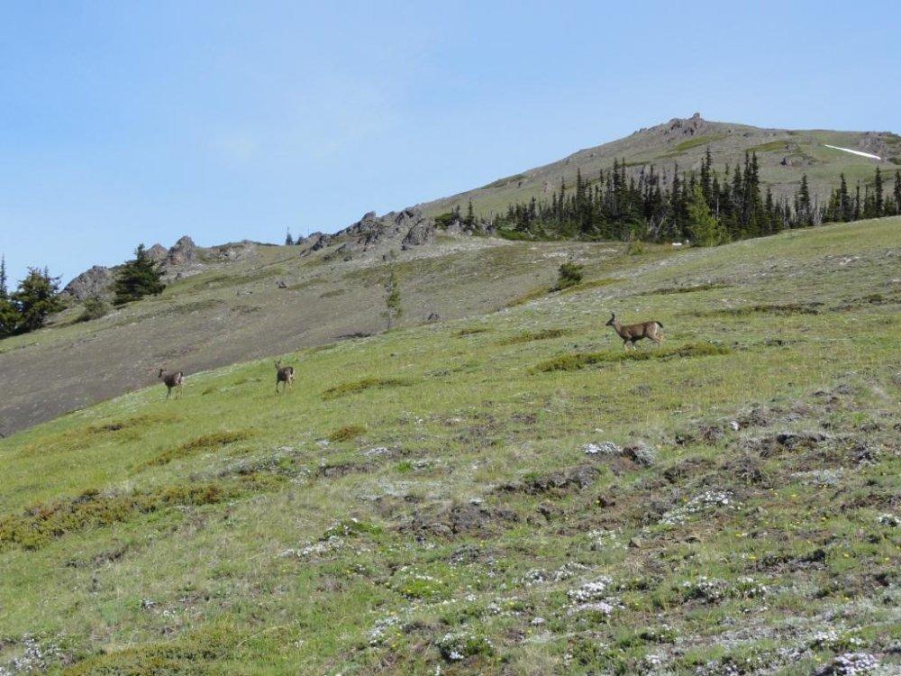 Deer at Deer Park.small.JPG