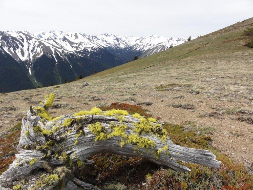 Grand ridge trail 2.xsmall.JPG