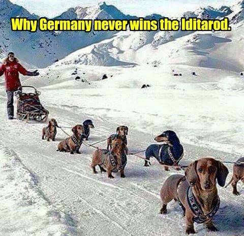 Why Germany never wins Iditarod.jpg