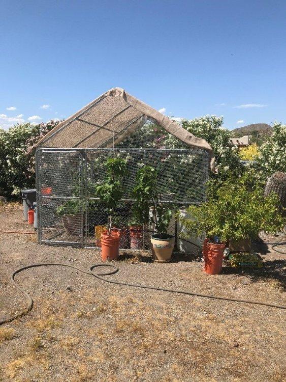 Garden cage.JPG