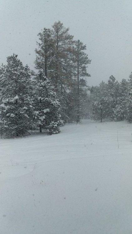 Snow 2 V2.jpg