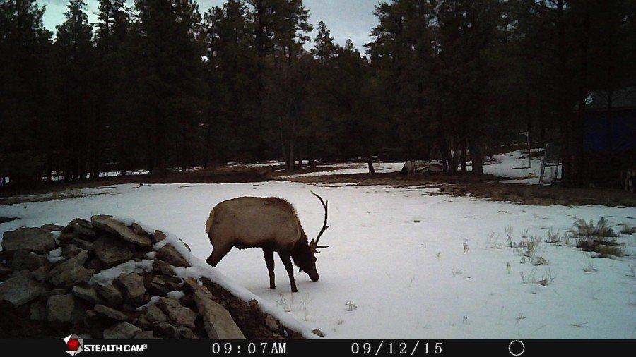 Elk 2 V2.jpg