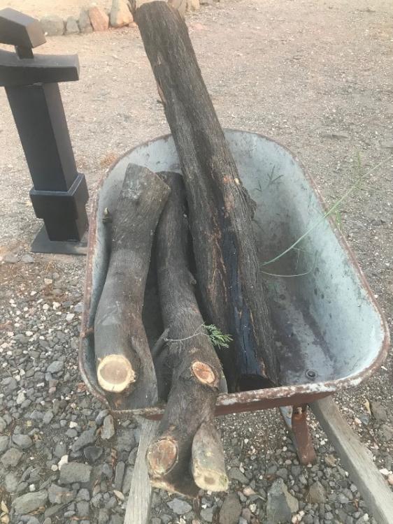 Mesquite logs V2.png