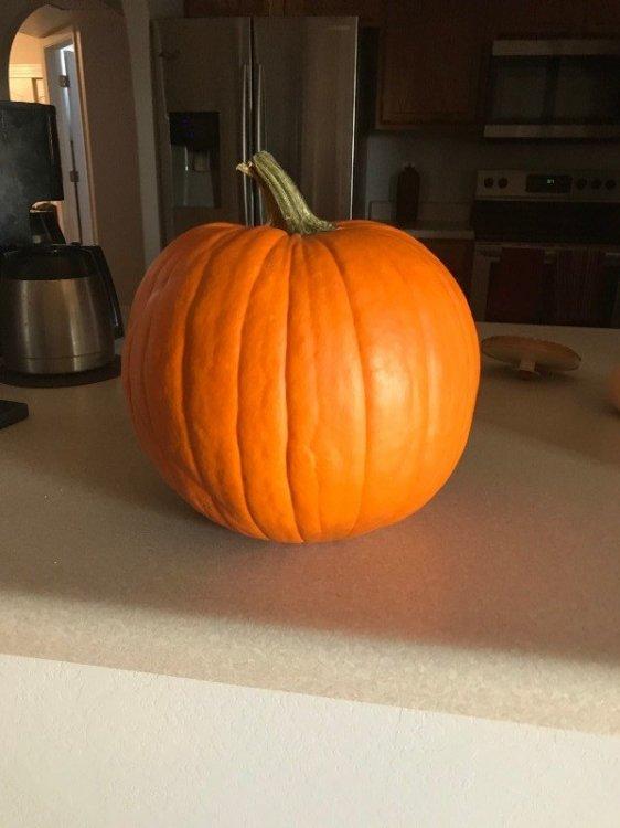 Pumpkin 2020.jpg